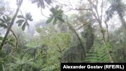 Влажный экваториальный лес в истоках Амазонки