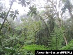 Классический ландшафт Французской Гвианы