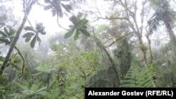 Лес Амазонии.