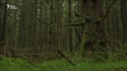 Здравствуй, дерево! Чему мы научимся у «интернета растений»?
