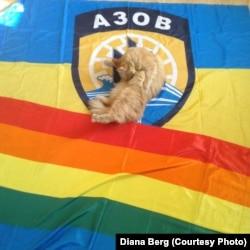 Два прапори і кішка Діани Берг
