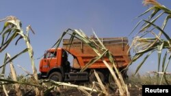 A truck harvests corn at a collective farm some 250 kilometers southeast of the Russian city of Voronezh.