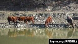 Домашний скот у пруда в селе Россошанка в Байдарской долине