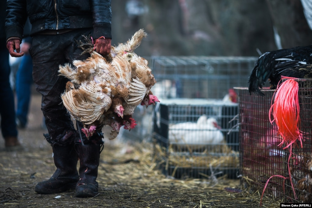 A bundle of chickens at a market in Vushtrri. Photographer Bleron Çaka says that day, like most Fridays, was particularly busy as people headed out for their weekly shopping.