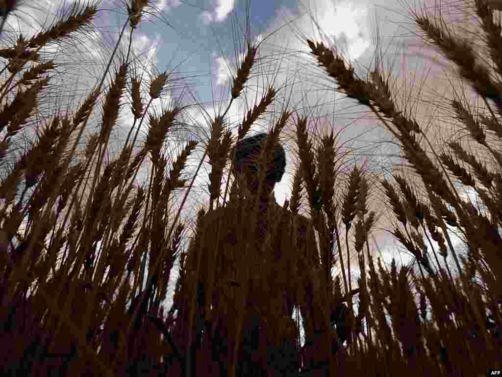 "An Afghan farmer inspects his wheat crop in July 2010 (AFP). - In order to avoid catastrophic food shortages that could collapse the global economy, the Earth Policy Institute's ""Plan B"" calls for a complex program of measures aimed at reducing carbon emission, restoring natural systems, and addressing key social problems that produce overpopulation and instability. Overall, Plan B calls for annual spending of $185 billion on all of these programs between now and 2020. That figure is about 28 percent of annual U.S. military spending or 12 percent of global military spending."