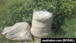 Turkmenistan. Bag of cotton