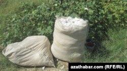Türkmenistan dowam edýän pagta gytlygynda täze dokma toplumyny gurýar