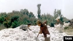 Ўзбекистон расмийлари фикрича¸ болаларни пахта даласига давлат ëхуд ҳукумат эмас¸ балки ота-оналар ҳайдамоқда.