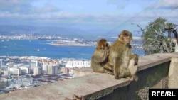 Гибралтар: последняя европейская колония