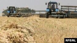 Уборка зерновых. Иллюстративное фото.