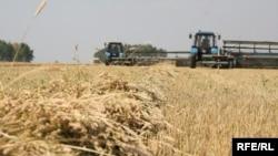 Идет уборка урожая зерновых в Северо-Казахстанской области.