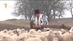 Ciobănaş cu 400 de oi şi 300 de capre...