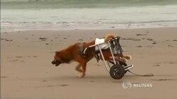 Собаки с ограниченными возможностями нашли приют в Перу