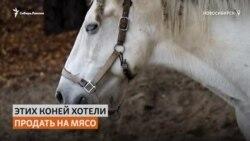 Сибирячка спасает коней, от которых решили избавиться их владельцы