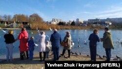 Люди кормят лебедей в бухте Омега
