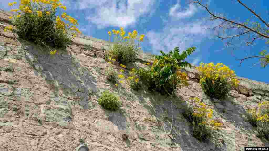 Субтропічна флора добре прижилася на підпірній кам'яній стіні набережної