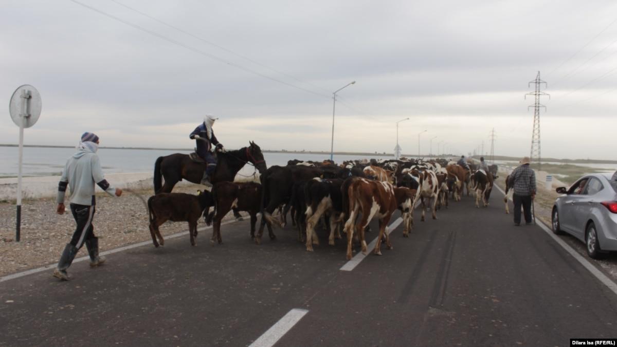 Казахстан ввел полный запрет на экспорт живого скота