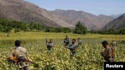 په افغانستان کې د نشه یي موادو پر ضد کمپاین.