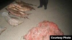 Рибата есетра од која се добива кавијар.