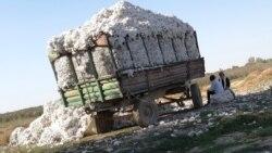Пахта ташийдиган трактор билан содир бўлган ҳалокатда бир аёл нобуд бўлди