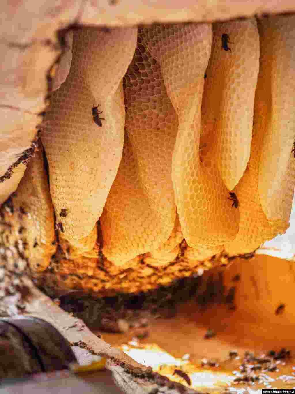 Внутри одного из 20 ульев Путкарадзе соты свисают с верхней части полого бревна. Он говорит, что всю свою жизнь проработал с пчелами в основном для того, чтобы «сохранить традицию», но благодаря растущему рынку этого уникального меда он планирует добавить еще 10 ульев