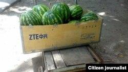 Арбузы в ящике с надписью компании ZTE. Иллюстративное фото.