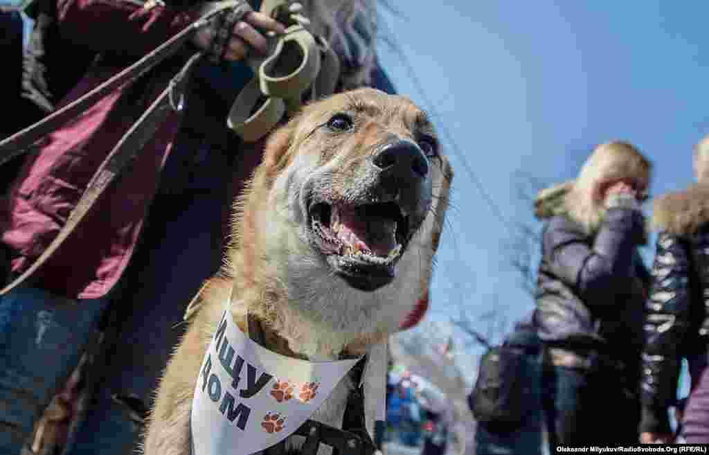 Комусь із собак поталанило більше, інші ще в очікуванні люблячих господарів