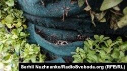 Тиждень тому кам'яний п'єдестал покрили живими рослинами розмарину і м'яти, але в ніч на 10 травня хтось вирвав частину з них