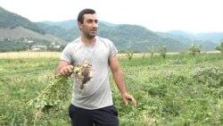 Լոռեցի Ադամն ապացուցել է` գյուղատնտեսությունը կարող է եկամտաբեր բիզնես դառնալ, բայց խոչընդոտները շատ են
