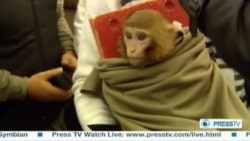 Iranian TV Airs Footage Of 'Space Monkey'