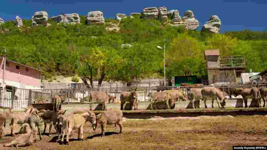 Більшість домашньої худоби і птахів Залісного зосереджено на приватній фермі «Диво-віслюк», яка вже 20 років функціонує на території колишнього колгоспу «Україна». Разом з віслюками там живуть коні, воли, корови, кози, вівці, гуси, качки, кури, декоративні голуби і павичі