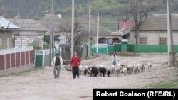 Мужчины в небольшом городке Конгаз в Гагаузии перегоняют овец. 17 апреля 2014 года.
