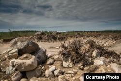 Вырубки около Приморска