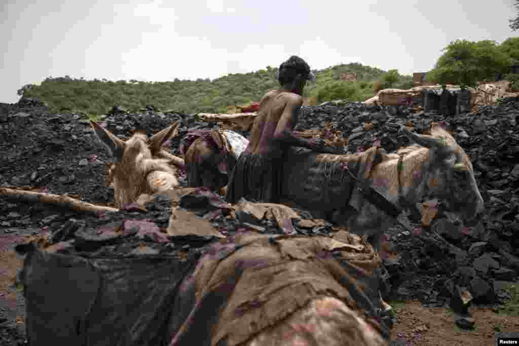 A miner unloads sacks of coal carried to the surface by donkeys.