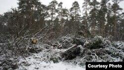 Цаговский лес в подмосковном Жуковском. Фото publicpost.ru