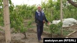 Մայիսի 23-ի ուժեղ քամու և կարկուտի հետևանքները Արևիկ գյուղում