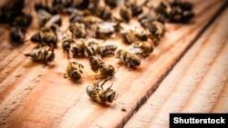 Специалисты связывают гибель пчел с использованием пестицидов и других химикатов