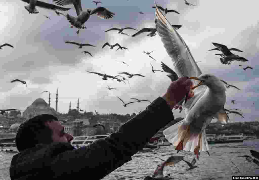 A man feeds seagulls with fish under the Galata Bridge in Istanbul, Turkey. (epa-EFE/Sedat Suna)