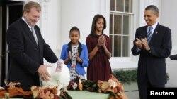 ԱՄՆ - Միացյալ Նահանգների նախագահ Բարաք Օբաման գոհաբանության օրվա կապակցությամբ «ներում է շնորհում» հնդկահավին, Վաշինգտոն, 23-ը նոյեմբերի, 2011թ.