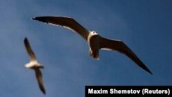 Вчені: за останні 50 років кількість птахів у Сполучених Штатах та Канаді зменшилася на 29 відсотків
