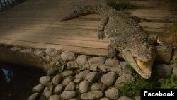 Фотография со страницы Ереванского зоопарка в Facebook