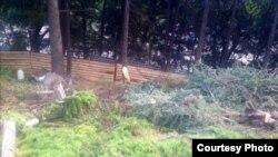 Вырубка реликтовых деревьев в Гурзуфе