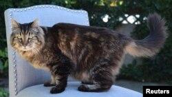 کوردروی، پیرترین گربه در قید حیات دنیا