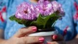 Kyrgyzstan - Bishkek - floral exhibition - flower show - flowers - natural culture