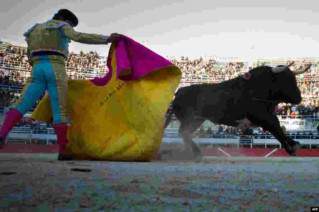 A Spanish matador, Juan Del Alamo, performs a pass on a Baltazar Iban bull during the Easter feria in Arles, southern France. (AFP/Bertrand Langlois)