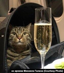 Кот Виктор на борту самолета