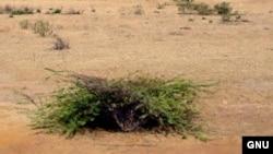 Южная Индия. В пустыне растения постоянно сталкиваются с избытком солнечного излучения