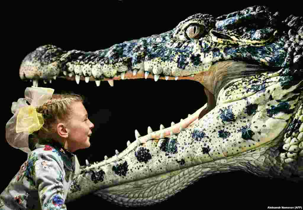 A young visitor looks at Cuban Crocodile by British photographer Tim Flach at an exhibition in Moscow. (AFP/Alexander Nemenov)