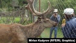 Нарынский государственный заповедник, архивное фото.