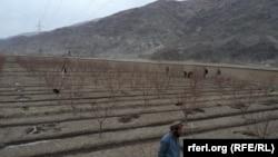 کرنې وزارت: افغانستان کې یوازې لس فیصده ځمکه د کرنې وړ ده.